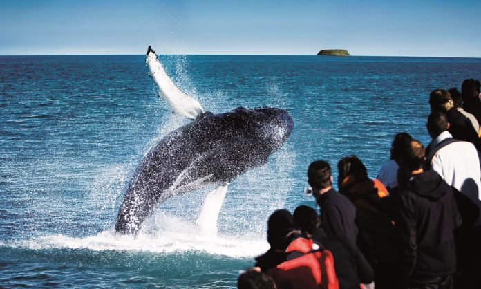 whales 696x418 - Top 15 whale watching trips