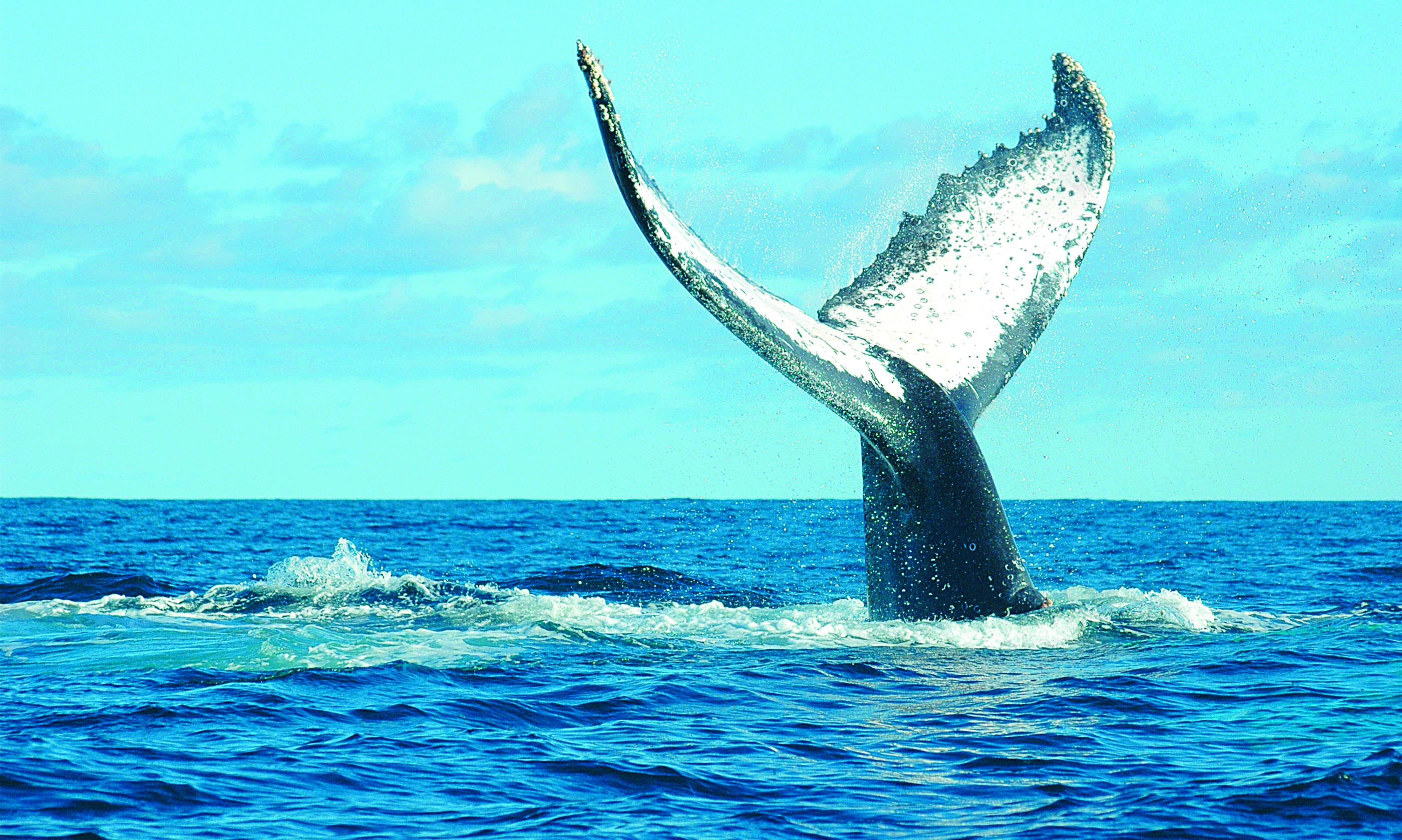 princesse bora lodge spa sainte marie madagascar - Top 15 whale watching trips