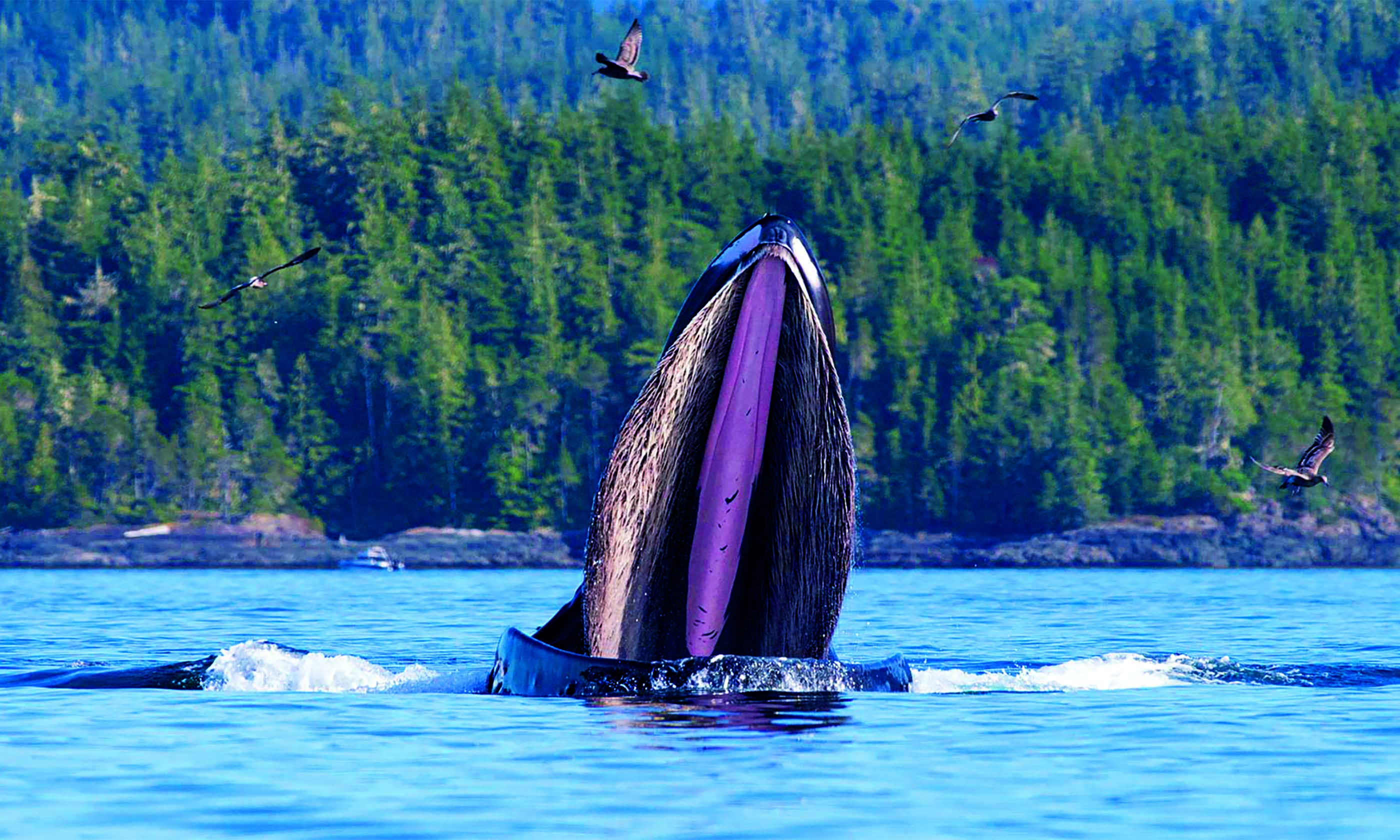kayaking with whales f9 - Top 15 whale watching trips