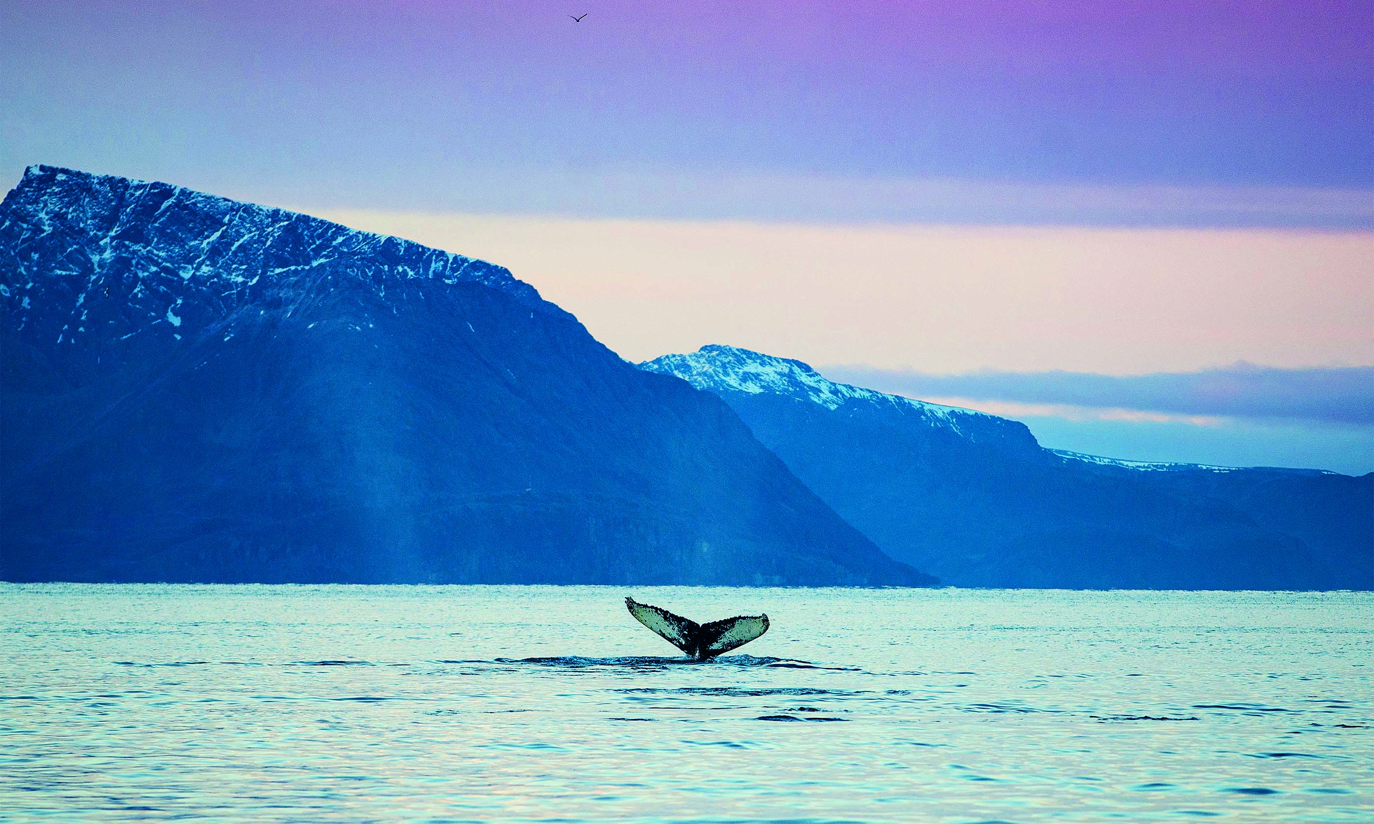 whalesafari nordekspedisjon 4 - Top 15 whale watching trips