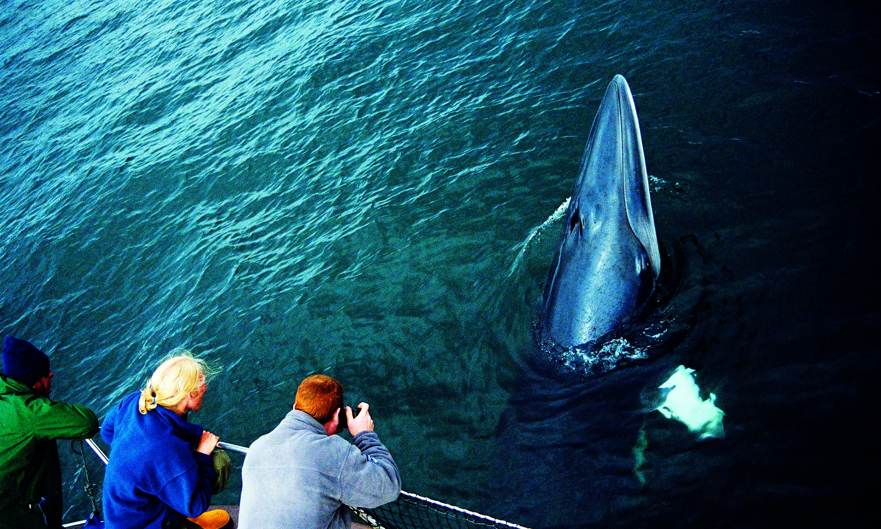 minke whale with customers copyright sea life surveys - Top 15 whale watching trips