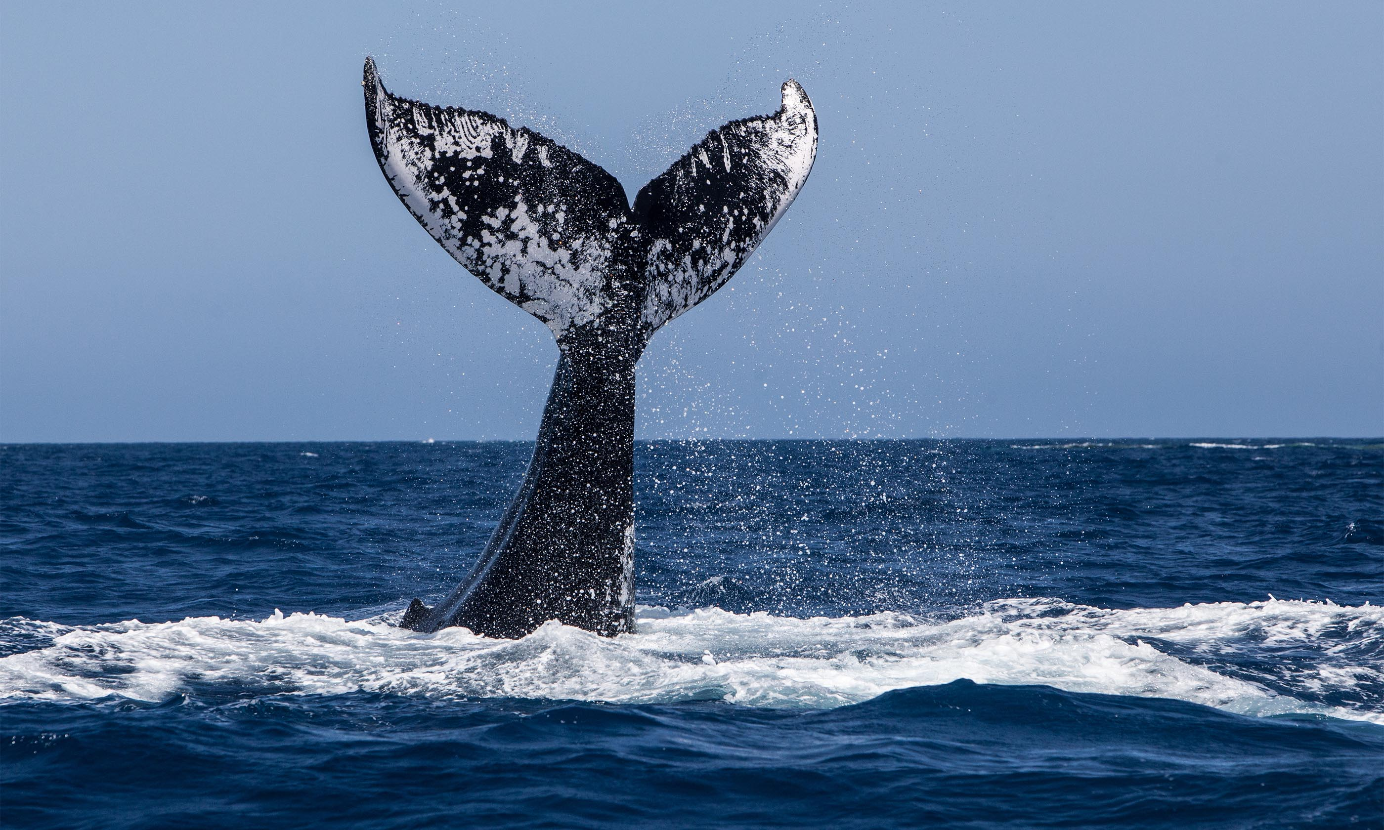 shutterstock 398371819 - Top 15 whale watching trips