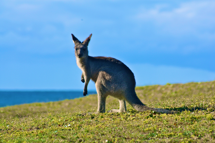 """4495648527 129af1f592 b - """"Only in Australia"""" Experiences"""